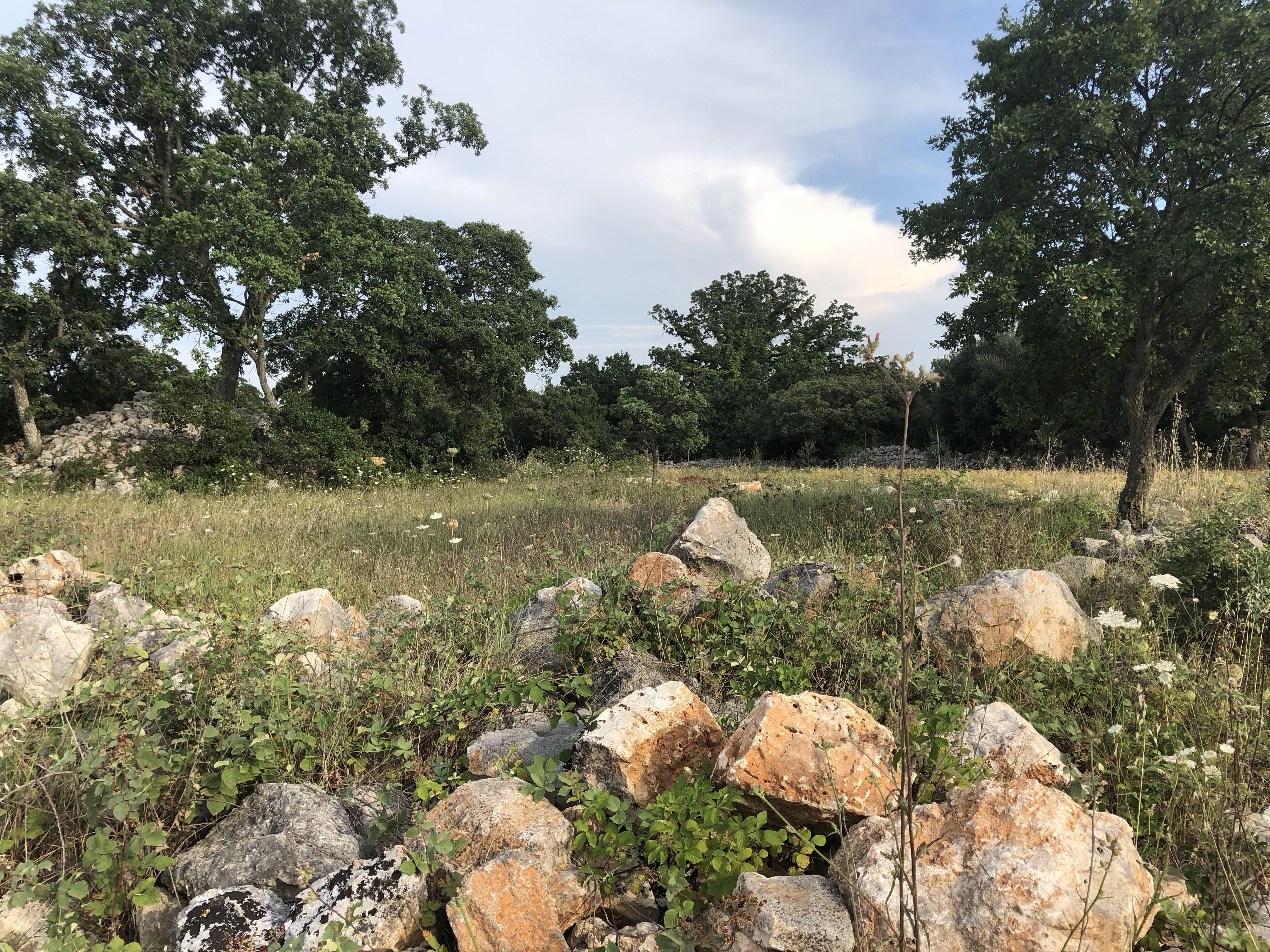 Terreno agricolo 4500 m²